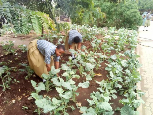 Najma (Left) working on her garden at Notre Dame School