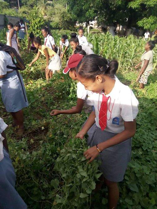 Vegetable garden 2.jpg