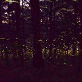 Magical fireflies' forest I 2021 at Our Cabaña