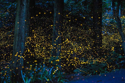 Magical fireflies forest